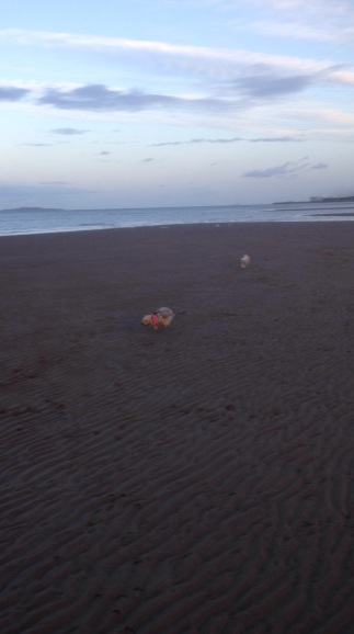running beach dogs