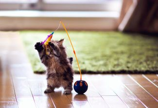kitten-playing-with-toy-57b737cc3df78c87638c0122