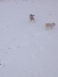 snow carnage