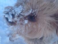 snowy lola